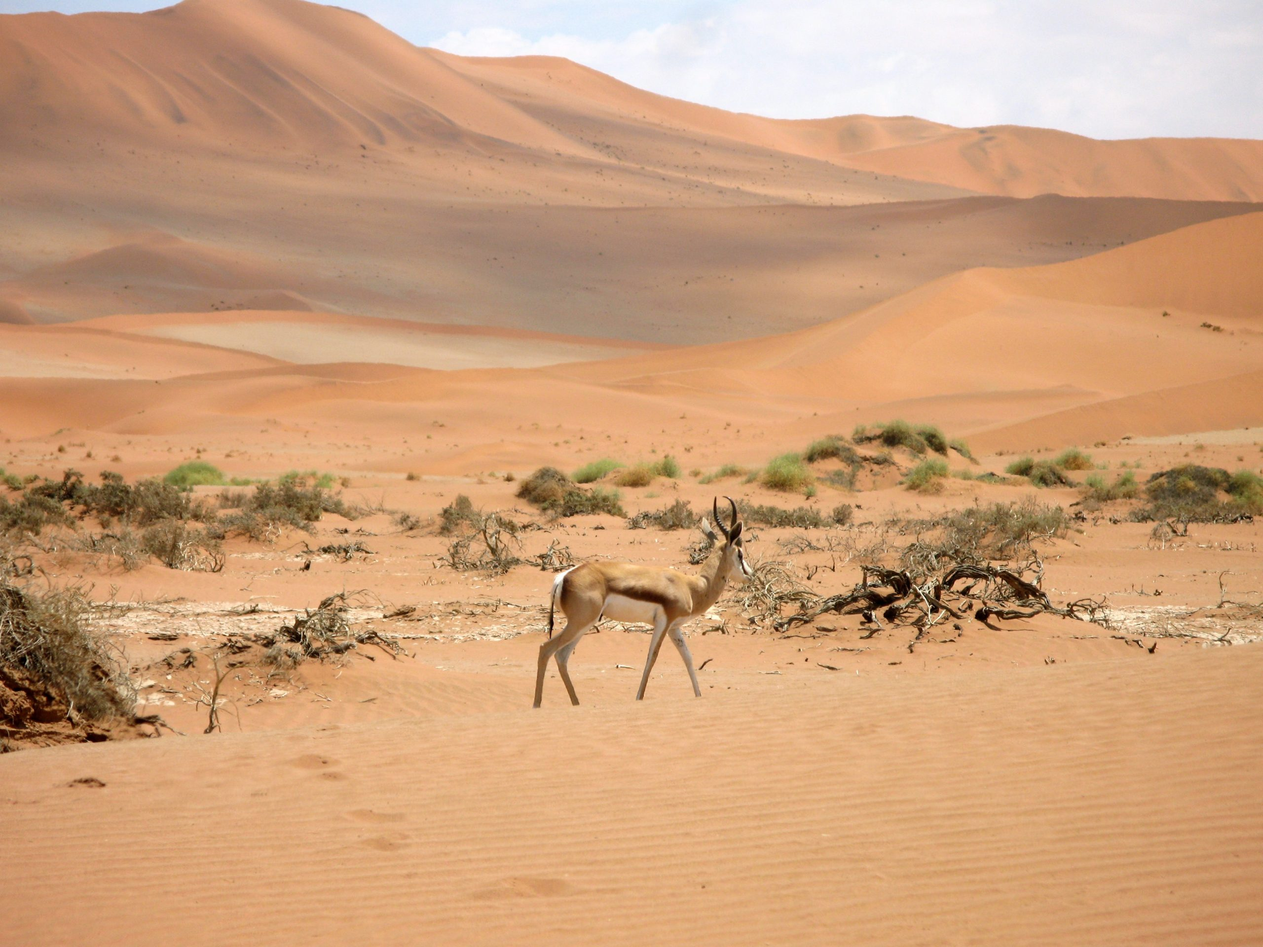 Namibie… divoká, pestrá a hvězdná