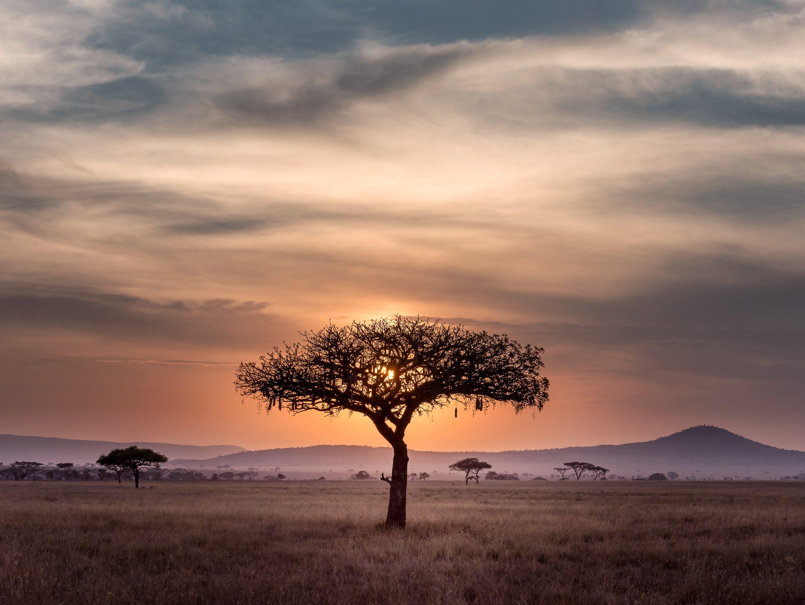 Afrika 2014 aneb Kam ebola nevolá a u hvězd chraňte buvola